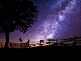 The Stars Above a Ramshackle Fence - Dennis Lowery